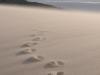 la-dune-un-peu-ventee